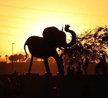 Arizona Elephant by mgramley