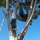 Tree Climber by Jan  Tribe