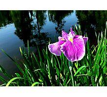 Swan Lake Iris Photographic Print