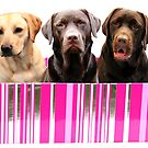 Labradors in a box by faithimages