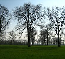 Trees in a green field by Ireentje