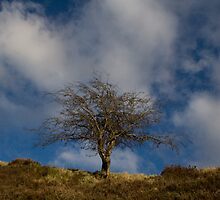 tree marsden yorkshire by Jean Bashford