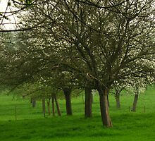 Flowering trees with fence by Ireentje