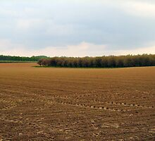 big empty field with forest by Ireentje