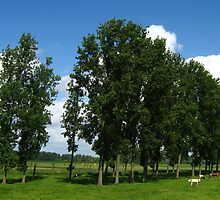 tall trees with cattle by Ireentje