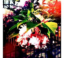 Gorgeous Florals hanging over a garden fence.  Photographic Print