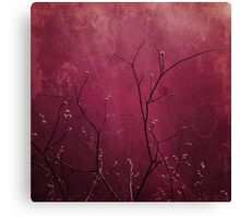 Daring Pink Canvas Print