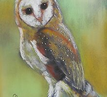 Barn Owl by Michelle Potter
