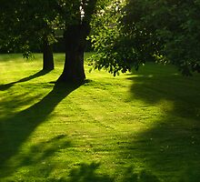 two trees with shadow by Ireentje