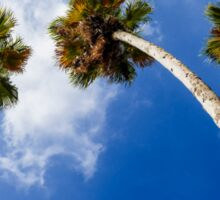 Awe inspiring photograph looking up at three mature high California Fan Palms Sticker
