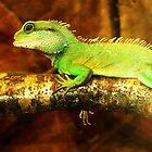 Lizard by Donna Chapman