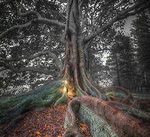 Banyan Trees Pt 2 by DavidMelville
