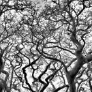 tree fractals winter no. 3 by dennis william gaylor