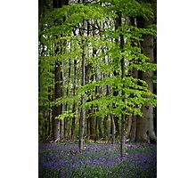 Blue Bells and Green Leaves Photographic Print