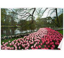 Tulip Lake  Poster