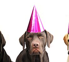 dogs in party hats by faithimages