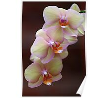 Orchid Perfection Poster