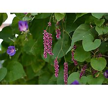 Pink Flowers with Leaves Photographic Print