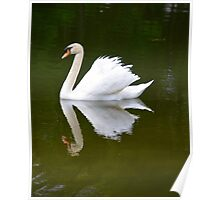 Swan Reflecting in the Lake Poster