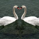 swan heart  by Cornelia Togea