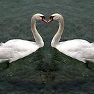 swan heart  by Cornelia Togea