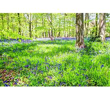 Bluebell Woodlands 1 Photographic Print