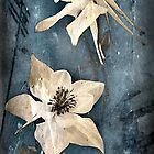 Columbine by Karri Klawiter