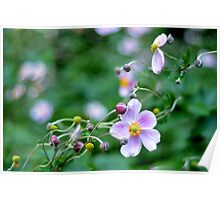 Pink Flower with Buds Poster