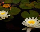 Capistrano Water Lilies by Larry Costales