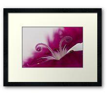 Dianthus (stamen) Framed Print