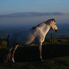 White Horse by Photodx