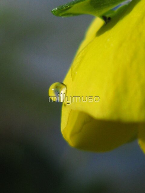 droplets on yellow by millymuso