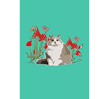 cat and flowers Photographic Print