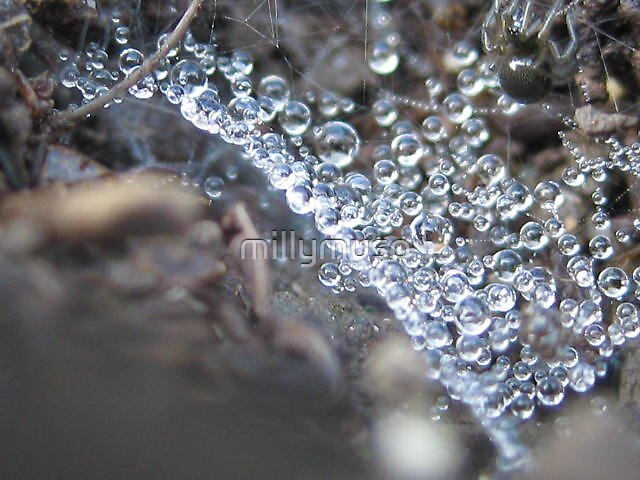 droplet spider by millymuso