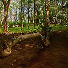 Tree Log by mrfriendly