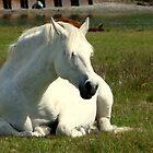 White Unicorn Sunbathing by HELUA