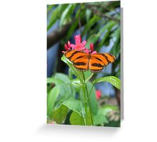 Tiger Butterfly Greeting Card