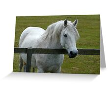 White By the Fence Greeting Card