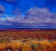 Outback SA by Pam Walker