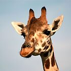Giraffe by Dan Shiels