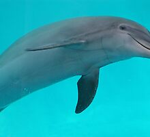 Dolphin by Sandy Keeton