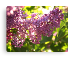 Lilac Aglow Canvas Print