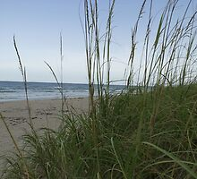 Sea Oats  by Larry  Grayam