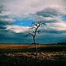 dead tree standing by Heath Dreger