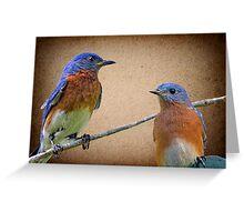 Eastern Bluebird Pair Greeting Card