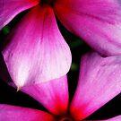 Pink Weed by NicoleConrau