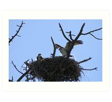 I Rule this Roost!! Art Print