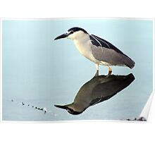NIght Heron Reflections Poster