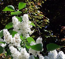 White Lilacs by George Cousins