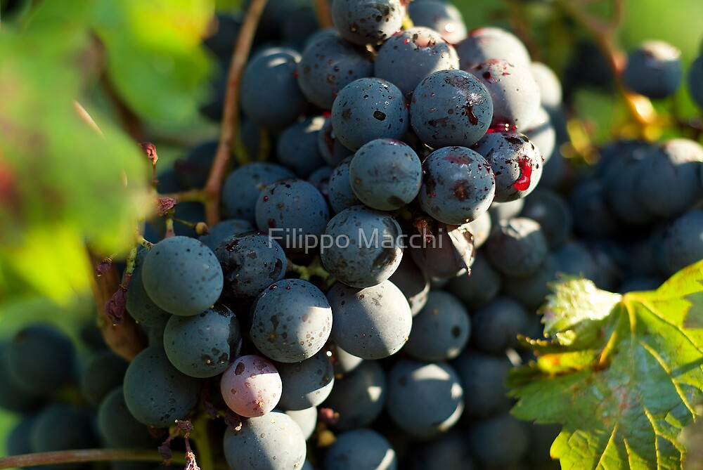 Grape by Filippo Macchi
